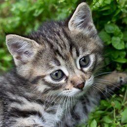 Katharina Schulze unterstützt Tierheime beim Tierschutz