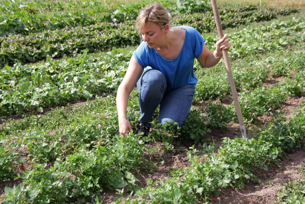 Katharina Schulze beim Beikrautjäten im Petersilienfeld.